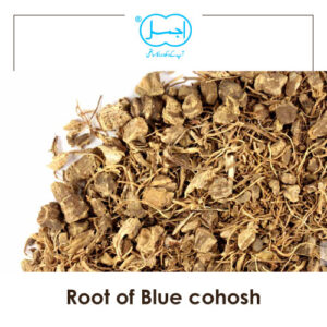 root of blue cohosh